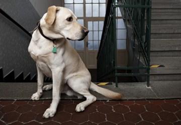 σκυλια για διαμερισμα