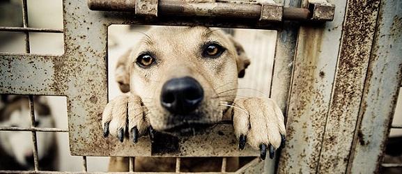 5 μύθοι για τους σκύλους στα καταφύγια