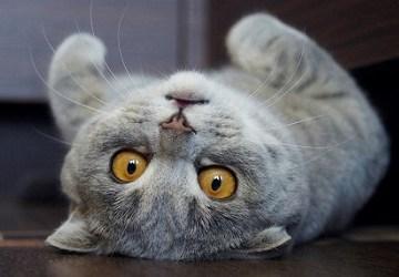 1512daa3921f 6 γατες που δεν μαδανε • Animalcity.gr