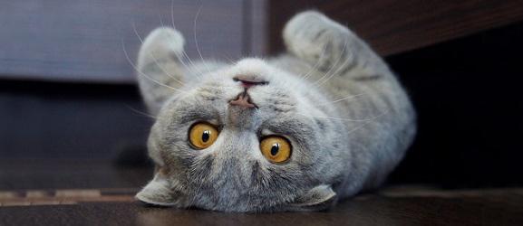 Γιατί οι γάτες συμπεριφέρονται τόσο παράξενα;