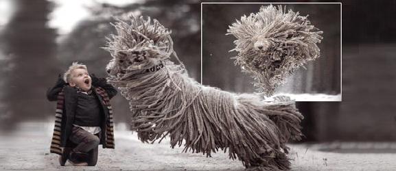Δείτε το σκύλο που μοιάζει με σφουγγαρίστρα καθώς παίζει στο χιόνι