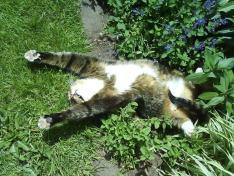 Catnip animals doing drugs