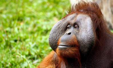 primate personalities