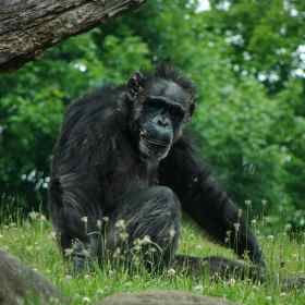 Great Apes Know When You're Wrong
