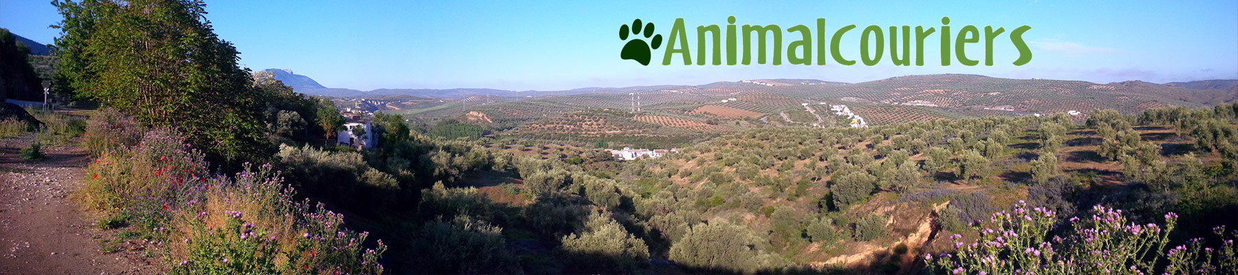 request a quotation for your pet transport
