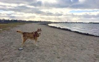 Oskar on Ribersborg beach. Laura says he loves the sand!