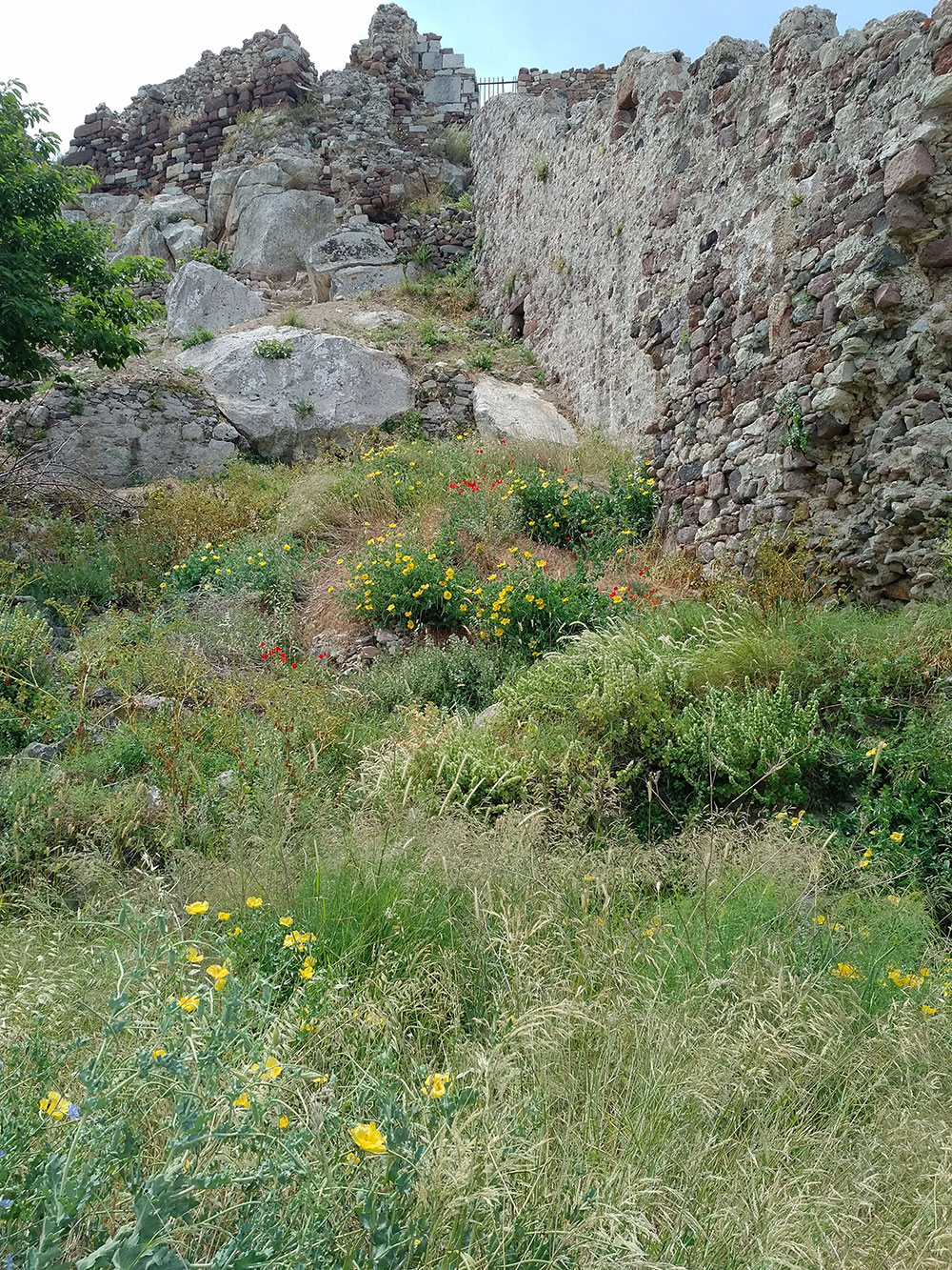 Wonderful rocky outcrops, abounding with wild flowers…