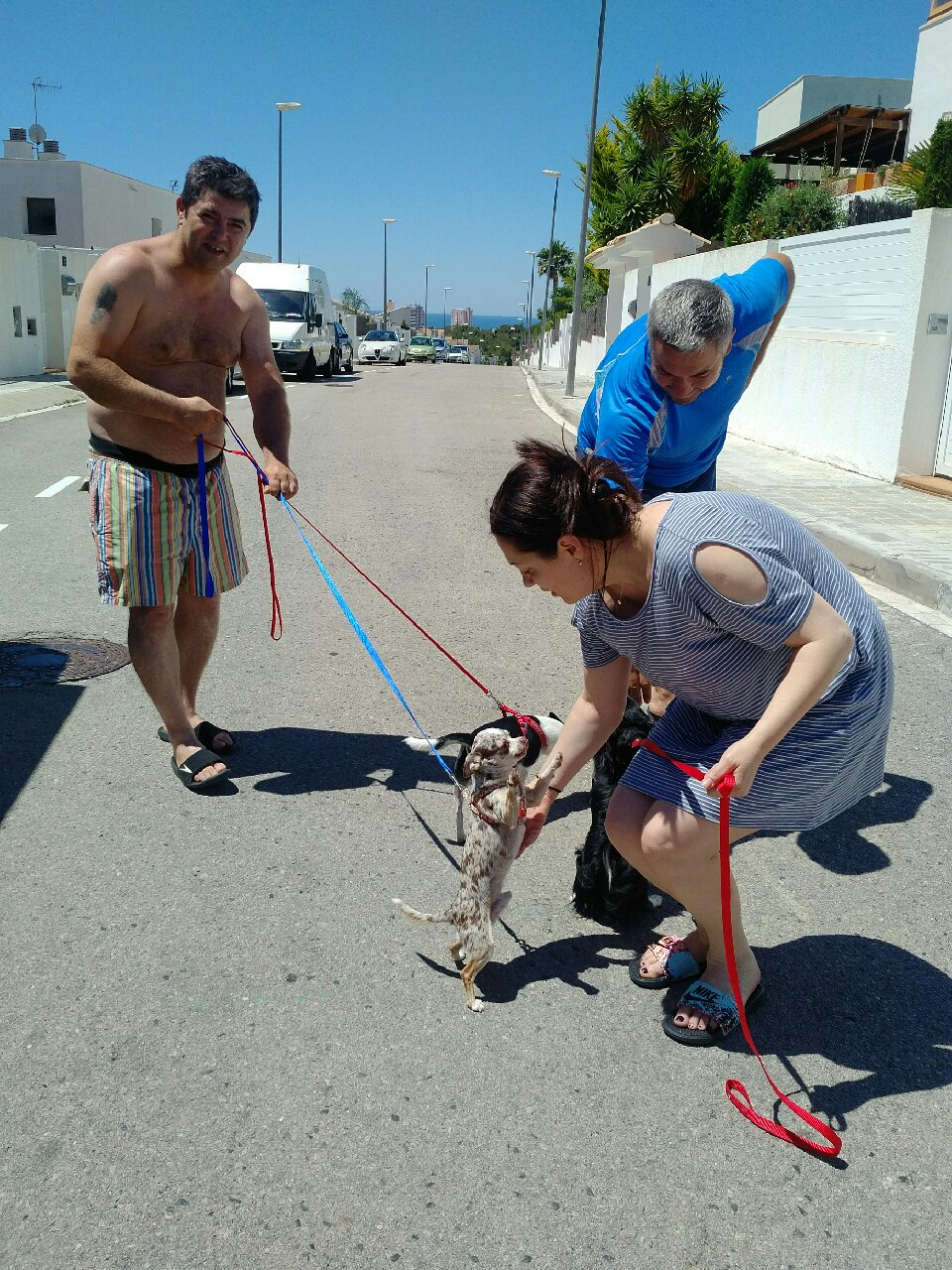 It was a delightful sunny day when we delivered the dogs in Sitges