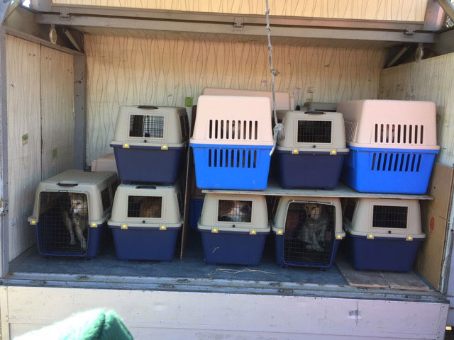 The rescued dogs in their crates