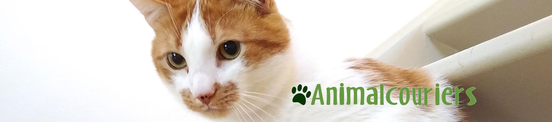 Ginger cat Merlin