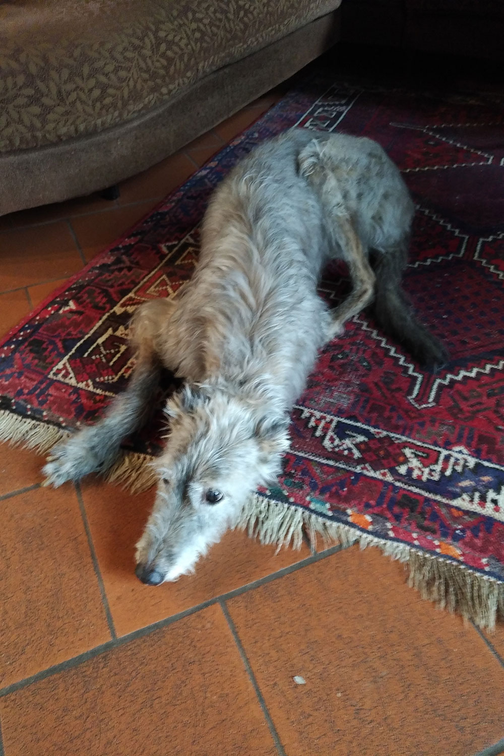 Chilled out and stretched out — Jac Jac just before getting on board