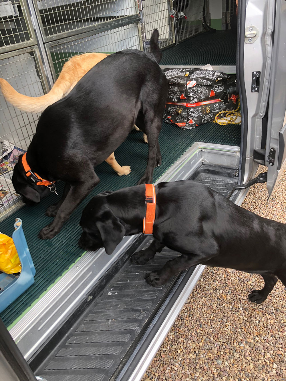 Trained gun dogs and used to travelling, these three are very well behaved. They were keen to explore our van, and quick to sniff out where the dog food is stored!