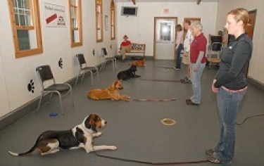 Dog Training Class Indianapolis