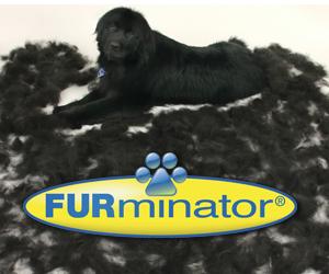 Indianapolis furminator shedless treatment