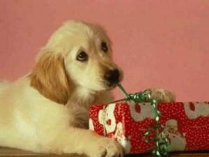 perro-regalo-navidad2412823