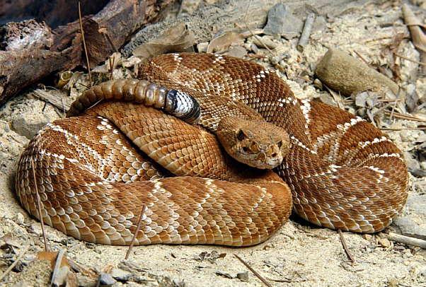 serpiente blog