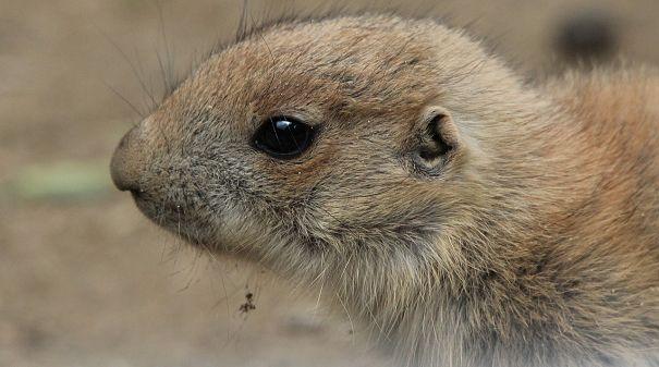 Prairie Life Animal
