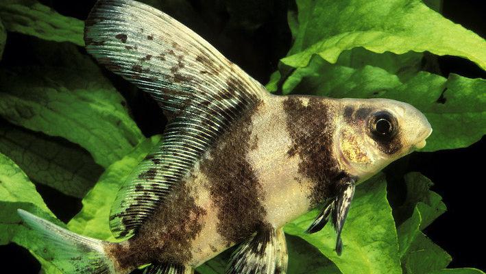 bassins de jardin quels poissons pour
