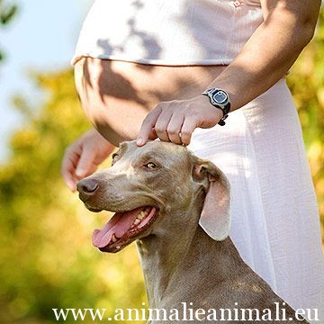 Donna-in-gravidanza-cane