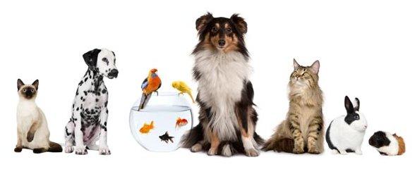 animali-domestici