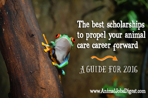 Rainforest tree frog with scholarships