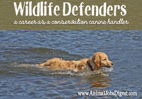 Wildlife defenders - career as conservation canine CK9 handler