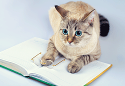 Write about cats