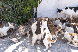 Help cats by working for an animal advocacy organization or shelter