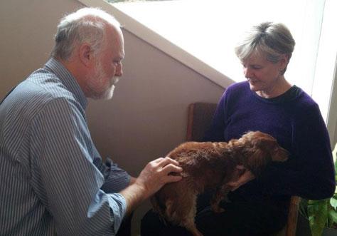 Dog getting an adjustment