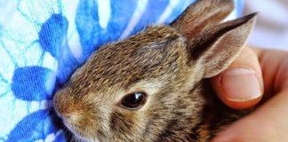 accessori-per-conigli