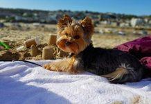 spiaggia pet friendly