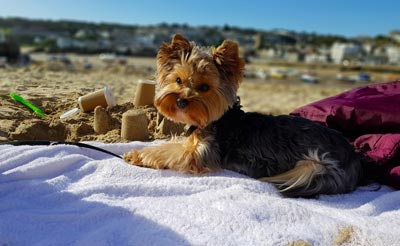 spiaggia pet friendly