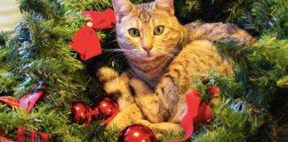 Animali e Natale.