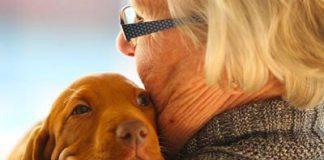cane per anziani
