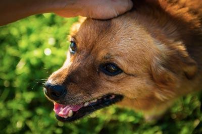uomo-adotta-un-cane