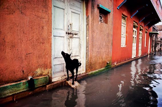 Steve McCurry. Animals - Porbandar, India, 1983