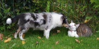 cani e gatti in primavera