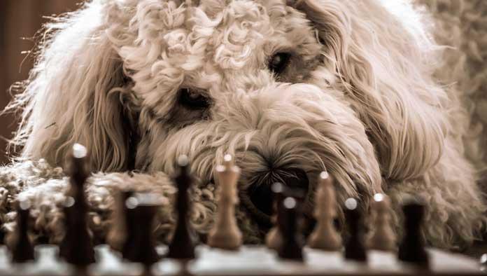 Giochi Cani solitari