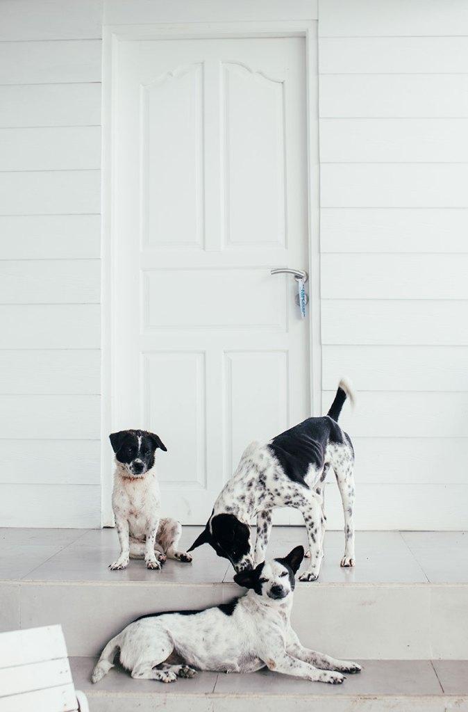 Cani che aspettano vicino alla porta