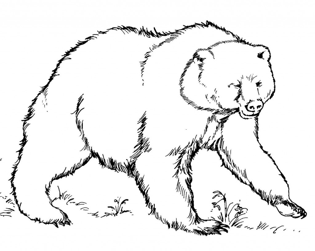 Bear Coloring Page For Kids Images Animal Place