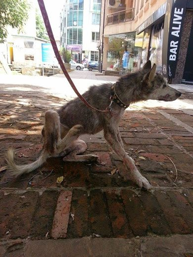 σκυλάκι