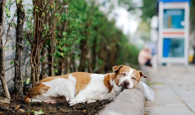 Πρόστιμο Δηλητηρίαση σκύλων