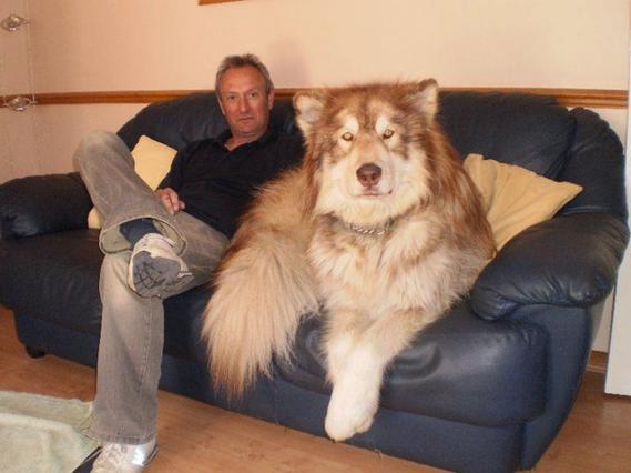 σκύλοι μικρόσωμοι σκύλοι μεγαλόσωμοι σκύλοι διάρκεια ζωής