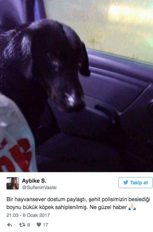 αδέσποτος σκύλος. τουρκία