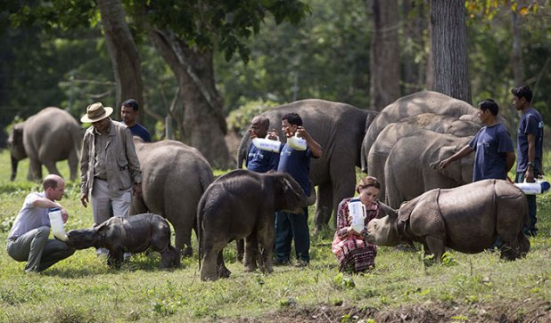 ρινόκεροι λαθροκυνηγοί