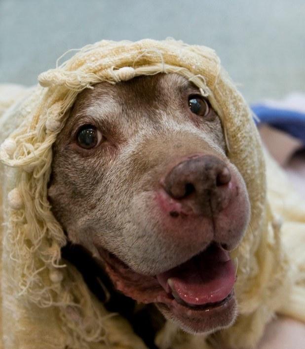 σκύλος βρίσκει τον ιδανικό μπαμπά Σκύλος 18 χρονών που ζει σε καταφύγιο ζώων βρίσκει τον ιδανικό μπαμπά! Σκύλος σκύλοι