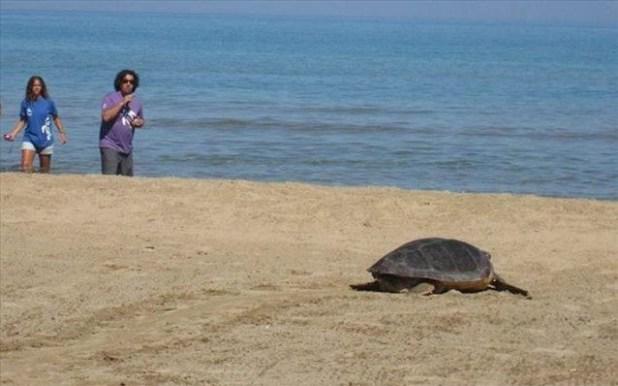 χελώνες αποκεφαλισμένες χελώνες