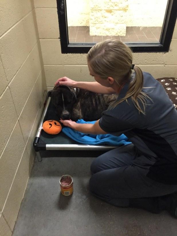 Σκύλος είχε κολλήμενο ένα βάζο στο κεφάλι του για 3 μέρες! Σκύλος σκύλοι