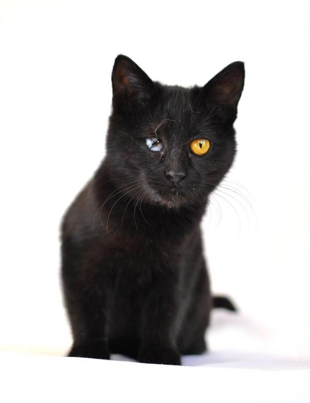 Γατάκι με πρόβλημα όρασης είναι ευγνώμων που διασώστηκε μαζί με τον αδερφό του