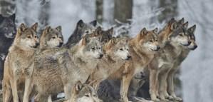 Animal Alliance Environment Voters